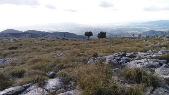 Espacio de la Serra d'Alfàbia donde, según el GOB, se pretende construir una viv