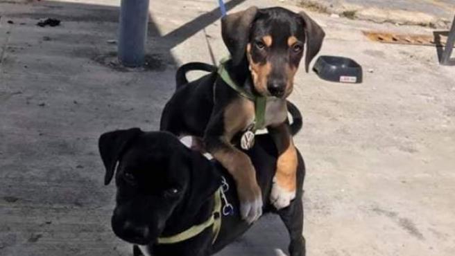 Dos cachorros de perro.