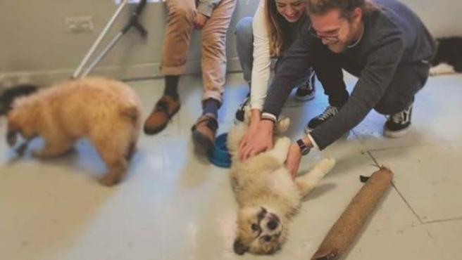 Un grupo de personas se divierten en compañía de cachorros en la cafetería para perros The Doger Café.