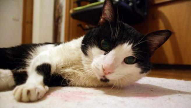 Una imagen de archivo de un gato.