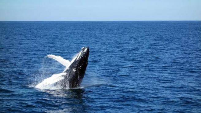 Una ballena azul.