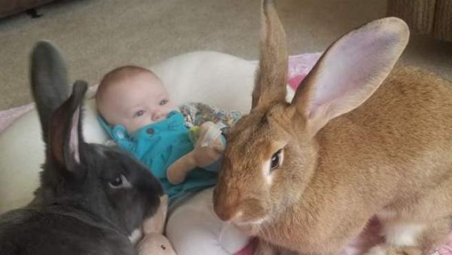 Los conejos Alfie y Amelia junto a la pequeña Bailey.
