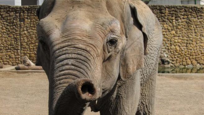 Imagen de archivo de la elefanta Flavia del Zoo de Córdoba.