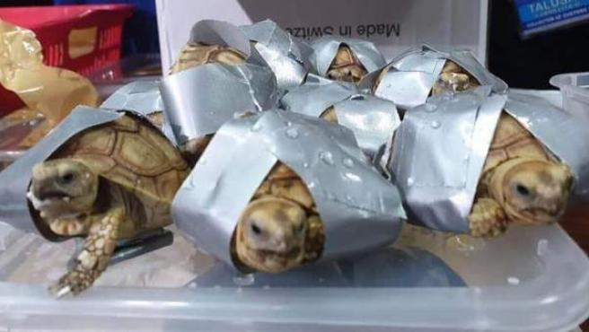 Tortugas encontradas en el aeropuerto de Manila (Filipinas).