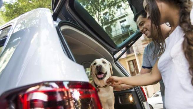 Viajen en el maletero o en el asiento trasero, siempre deben ir sujetos con los sistemas de seguridad específicos.