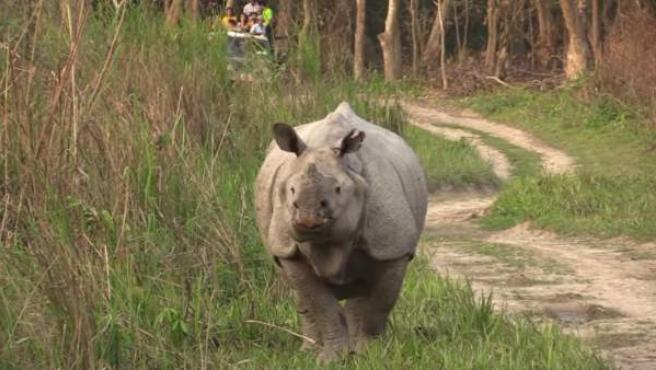 Rinoceronte en el Parque Nacional de Kaziranga.