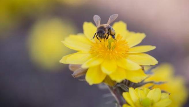 Una abeja recolecta el polen de una flor.
