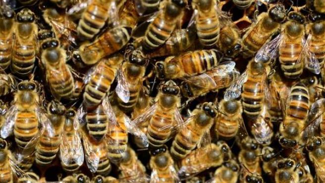 Una colmena de abejas.