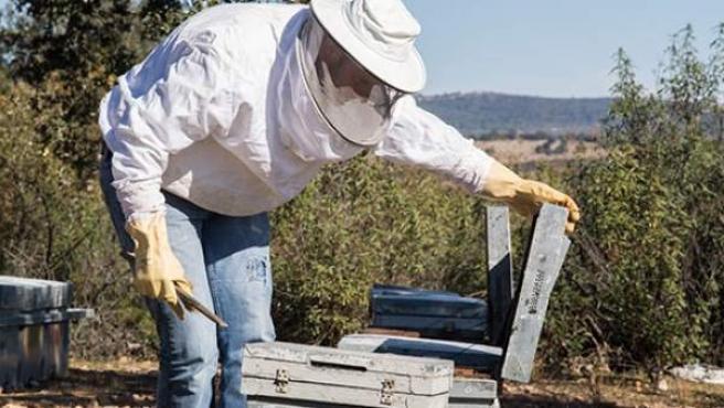 Un apicultor ante una colmena de abejas.