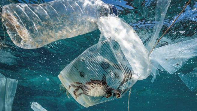 Un cangrejo permanece atrapado en un vaso de plástico en el mar en el Pasaje de Isla Verde en Filipinas. Imagen del 7 de marzo de 2019.