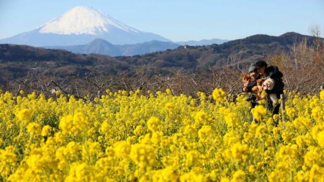 Dos japonesas disfrutan de un paseo al aire libre con sus mascotas, con el Monte Fuji al fondo, en el parque de Azumayama, en Ninomiya, en la prefectura de Kanagawa.