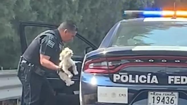 Un policía rescata a un perrito que estaba en medio de una autopista.