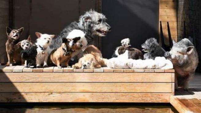 Un hombre se dedica a adoptar perros mayores que no quiere nadie para darles una mejor vida.