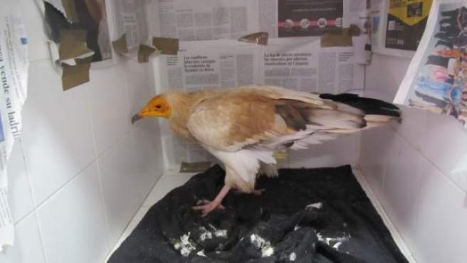 Sucesos.- Investigan el origen del envenenamiento de 14 aves en el entorno de Soria