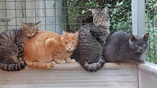 Miembros de una colonia de gatos controlada de Barcelona.
