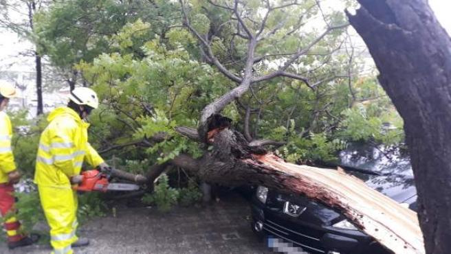 Los bomberos retiran un árbol caído por la lluvia y el viento sobre un coche en Aldaia