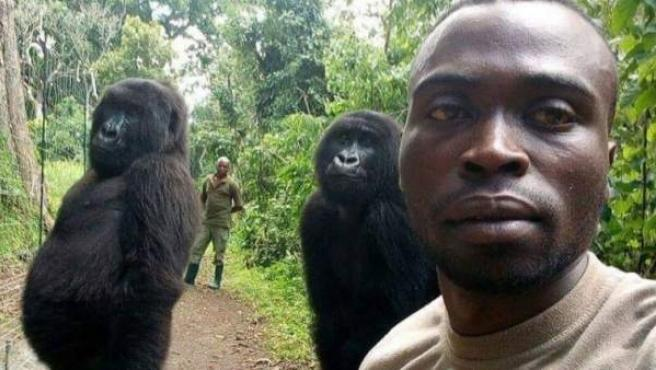 Uno de los guardias del Parque Nacional de Virunga, en el Congo, con dos gorilas.