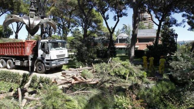 Un árbol, tras caer en los Jardines de Cecilio Rodríguez del Retiro.