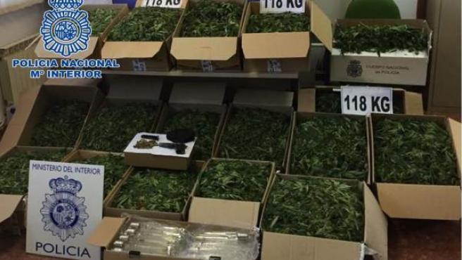 Córdoba.- Sucesos.- Desmantelada una plantación en El Higuerón con 118 kilos de marihuana