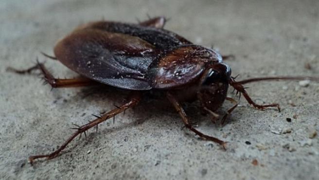 Una cucaracha.