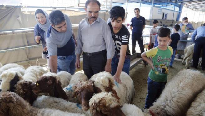 Ovejas a la venta en un mercado de Teherán (Irán) para la Fiesta del Sacrificio.