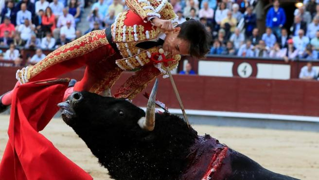 El diestro Gonzalo Caballero sufre una cogida al entrar a matar a su primer toro durante el octavo festejo de la Feria de San Isidro.