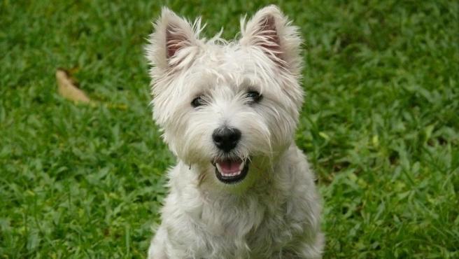 La nueva pareja del demandante ha puesto en duda el trato que el animal recibe de su dueña.