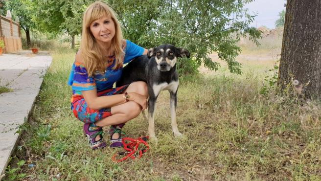 Favia, uno de los ejemplares que se puede adoptar asociado al Perrotón y al día del perro sin raza.