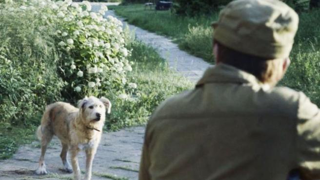 'Chernobyl': ¿Qué pasó con los animales de la zona de exclusión?
