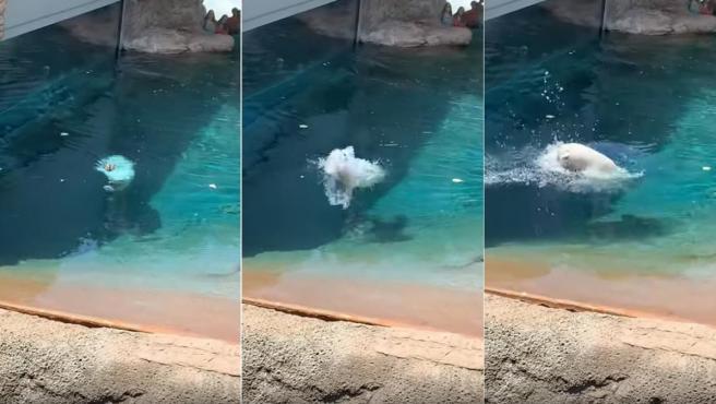 Secuencia de fotos del ataque de un oso polar a un pato en el zoo de San Diego.