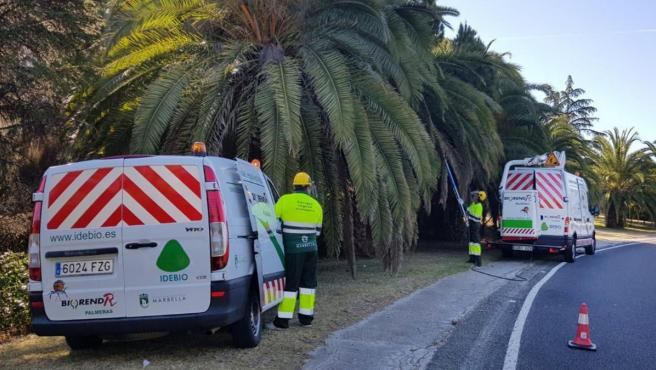 Málaga.-Ayuntamiento de Marbella aboga por métodos ecológicos para la campaña de control de plagas en parques y jardines