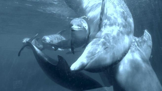 Fotografía de archivo de los ejemplares de delfín del Zoo de Madrid.