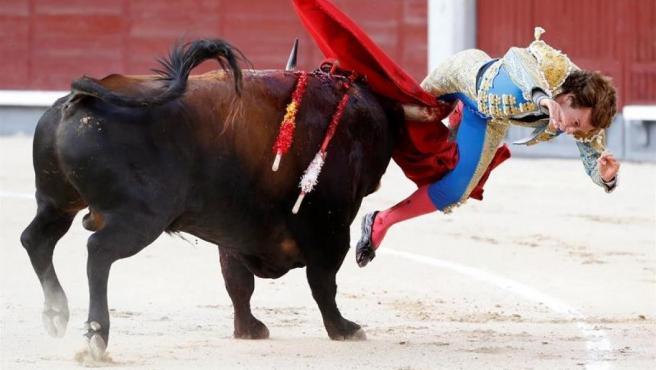 El diestro Román Collado sufre una cogida durante su faena en la plaza de toros de Las Ventas.