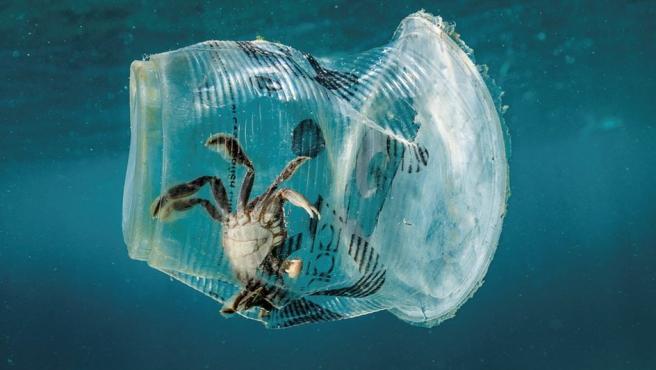 Un cangrejo permanece atrapado en un vaso de plástico en el mar en el Pasaje de Isla Verde (Filipinas).