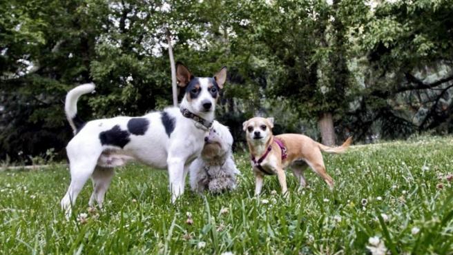 <p>Los golpes de calor en perros son más problemáticos debido a que solo transpiran por las patas.</p>