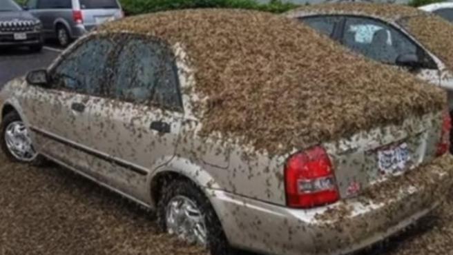 Un enorme enjambre de mariposas cubre varios coches en Ohio (EE UU).