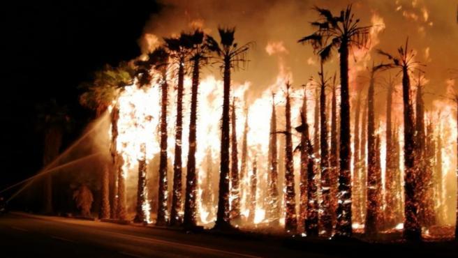 Imagen de palmeras ardiendo en Elche.