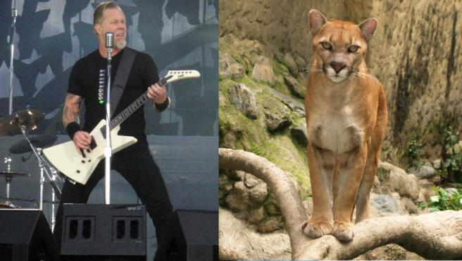 James Hetfield, de Metallica, contactó con una seguidora que se salvó de ser ataca por un puma.