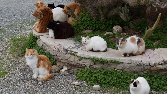 Una imagen con varios gatos.