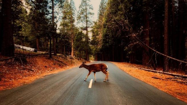 Las comunidades con más accidentes causados por animales son Galicia, Castilla y León, Aragón y Cataluña.