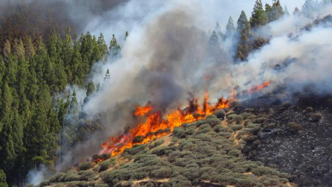 Vista del incendio declarado en la zona de Artenara, en el oeste de la isla de Gran Canaria.