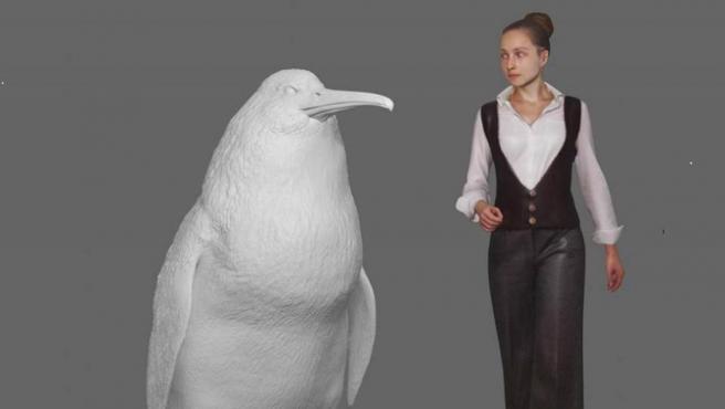 Imagen de una nueva especie de pingüino gigante, de aproximadamente 1,6 metros de altura, que se ha identificado a partir de los fósiles encontrados en Waipara (Nueva Zelanda).