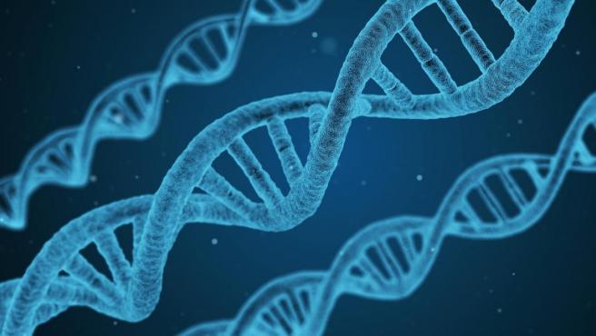 Una imagen de genes en el microscopio electrónico.