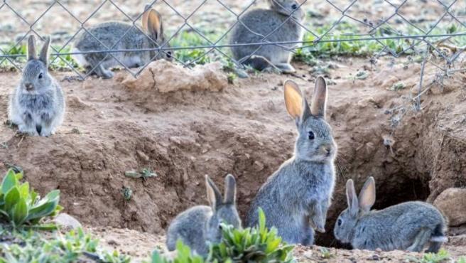 Un Grupo Animalista Asalta Una Granja En Gurb Y Se Lleva 14 Conejos