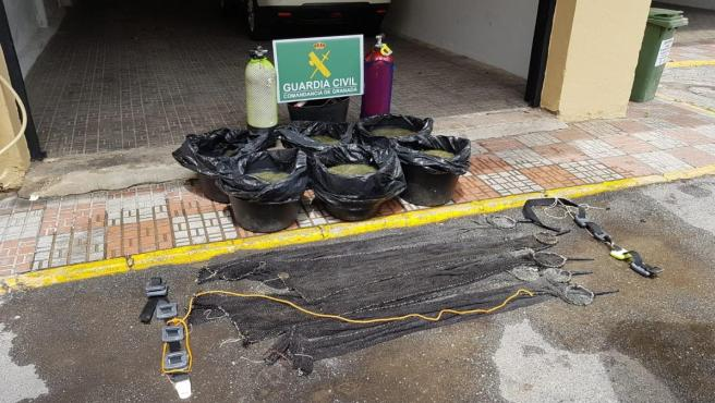 Intervenidas 206 kilos de anémonas de mar capturadas ilegalmente en Almuñécar (Granada), en imagen de archivo