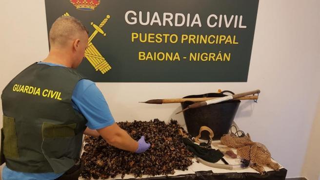 Percebes requisados a un 'furtivo' que fue detenido en Baiona (Pontevedra)