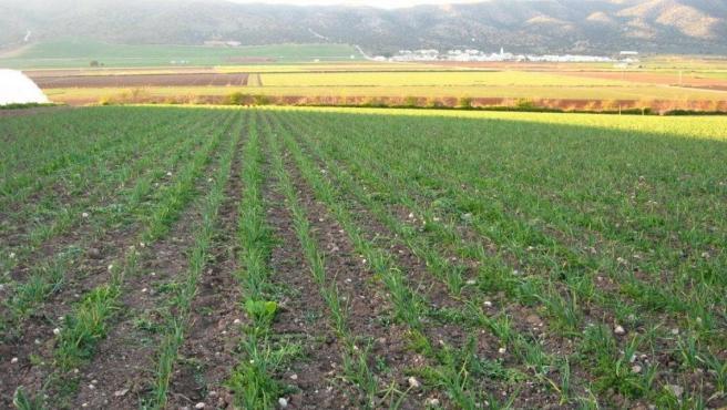 Finca de agricultura ecológica.