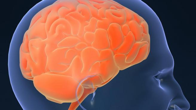 <p>Representación de un cerebro humano.</p>