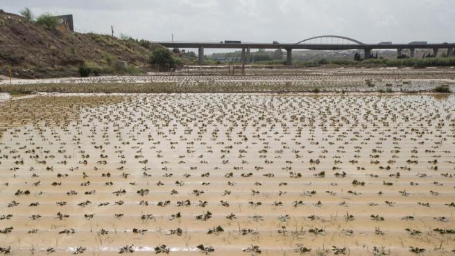 Una fina de hortalizas anegada por la gota fría en Molina de Segura (Murcia).