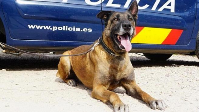 Uno de los perritos de Héroes de 4 Patas.